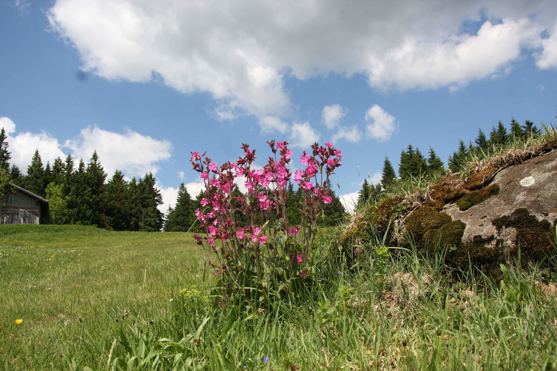 Summer Vacation Bavarian Forest Grainet