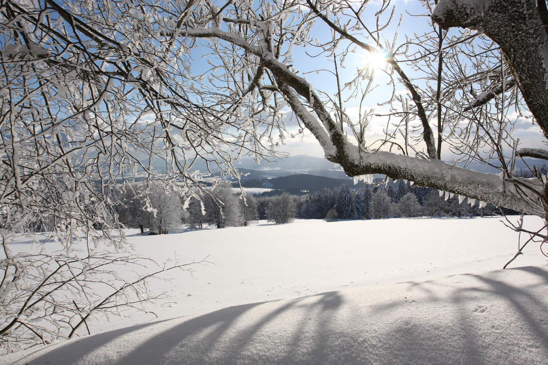 Winter Vacation Bavarian Forest Grainet